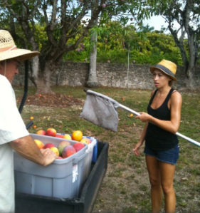 Tessa Mencia picking organic mangoes for Real Sorbet
